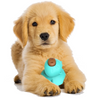 2021 Dog Smart Toy Play Manufacturers For Chew Eco Friendly New Arrivals Pet Products
